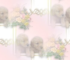 la_puppies-bg.jpg
